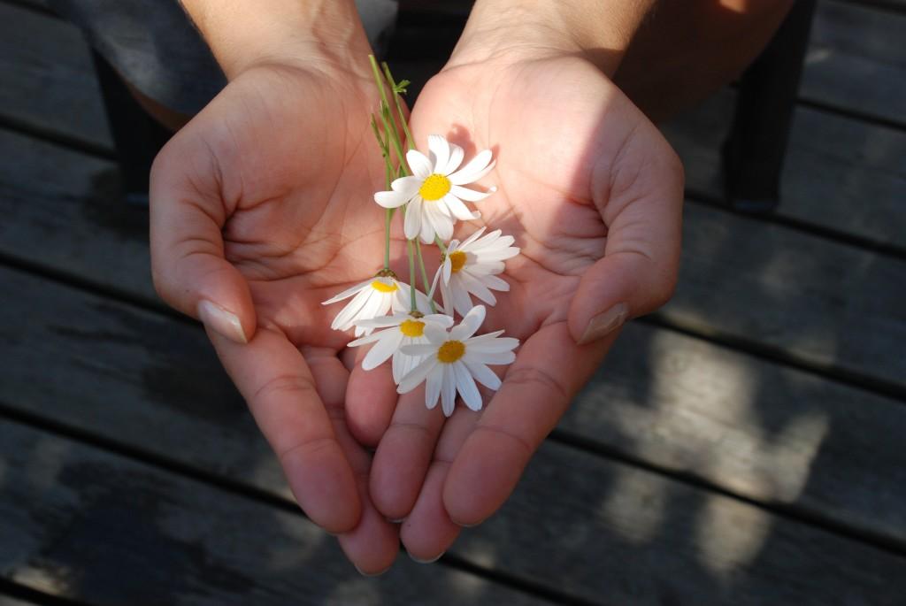 flower-22656